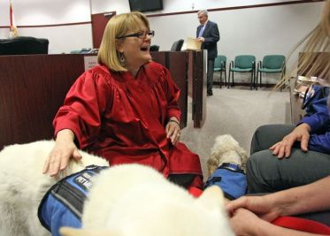 Judge Lynn Tepper allows therapy dogs in the courtroom. [Photo: Brendan Fitterer, Tampa Bay Times]