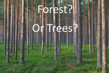 Aforest